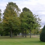 A giant softly pyramidal yew tree appears to be gliding across the lawn chasing some trees and some people